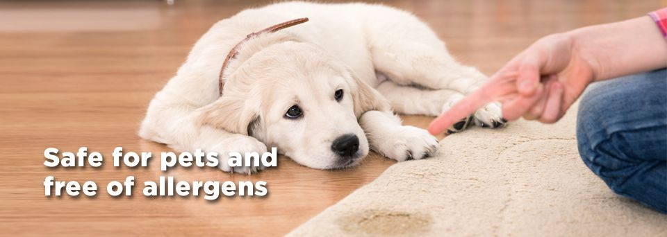 pet stain removal and pet odour removal